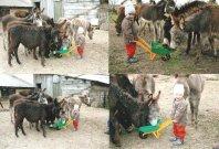 osli z Bulharska