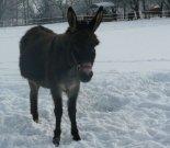 Oslinka zima 2009