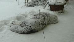 Zima 28.12.2010