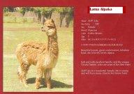 lama v barvě vikuni